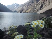 Flowers in inca lagoon. Photo taken in en portillo chile in inca lagoon on a bicycle trip Royalty Free Stock Images
