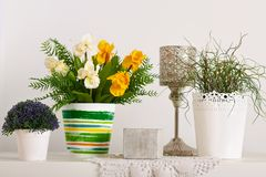 Flowers and indoor plants on white wall background stock images
