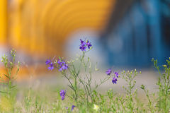 Flowers on industrial background. Show cleaner production Royalty Free Stock Photography