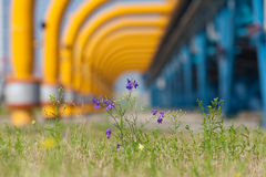Wild flowers on industrial background. Show cleaner production Royalty Free Stock Photography