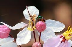 Flowers&Insect Fotos de archivo libres de regalías