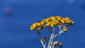 Flowers insect and blue sky Royalty Free Stock Photo
