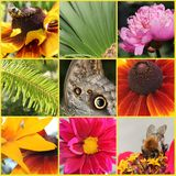 Flowers and insect collage. Collage of various kinds of colourful flowers and insect stock photo