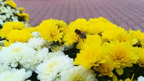 Flowers and insect royalty free stock image