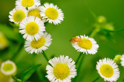 Flowers and insects Stock Photography