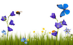 Flowers and insects isolated on white Stock Images