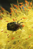 Flowers and insects. In the suburban areas in Krasnodar Stock Images
