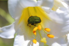 Flowers and insects Royalty Free Stock Images