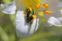 Flowers and insects. In the suburban areas in Krasnodar Stock Photos