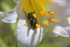 Flowers and insects. In the suburban areas in Krasnodar Royalty Free Stock Images