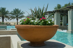 Flowers inside big brown pot near swimming pool Stock Images
