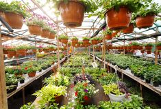 Flowers inside a garden center greenhouse, wide angle photo. Stock Photography