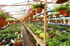 Flowers inside a garden center greenhouse, wide angle photo. Stock Image