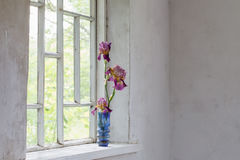 Flowers  inside of window Royalty Free Stock Images