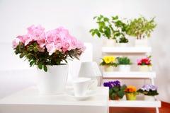 Flowers in interior Stock Photos