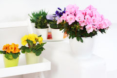 Flowers in interior Stock Photos