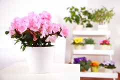 Flowers in interior Stock Image