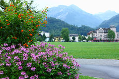 Flowers in Interlaken Royalty Free Stock Photo