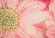Flowers, intimate tone vintage scenic communication represents a focus love.soft. Royalty Free Stock Images