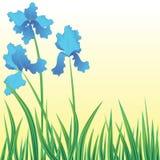 Flowers iris Royalty Free Stock Photos