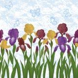Flowers iris and butterflies, seamless Stock Photo