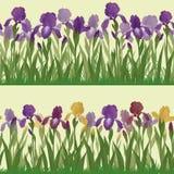 Flowers iris and butterflies, seamless Royalty Free Stock Photos