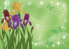 Flowers iris and butterflies silhouettes Royalty Free Stock Photo