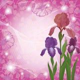 Flowers iris and ipomoea contours Stock Photo