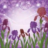 Flowers iris and ipomoea contours Royalty Free Stock Photo