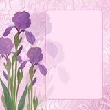 Flowers iris on pink background Stock Photos