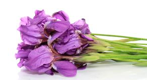 Flowers irises,isolated. Stock Photos