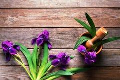 Flowers irises Stock Photography
