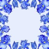 Flowers Irises watercolor spring Botanical design illustration greeting card invitation decoration royalty free illustration