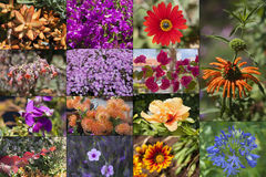 Flowers of the island Madeira collage. Stock Photo