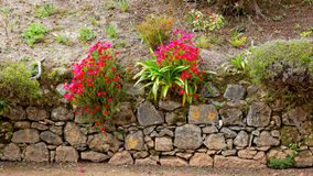 Flowers at the island of Sao Miguel Royalty Free Stock Images