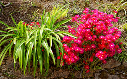 Flowers at the island of Sao Miguel Stock Photography