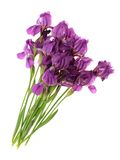 Flowers, isolated. Royalty Free Stock Image