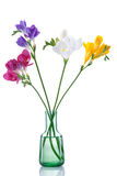 Flowers Isolated Stock Image