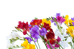 Flowers isolated Royalty Free Stock Photography