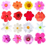 Flowers Isolated Royalty Free Stock Image