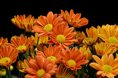 Flowers. A flowers with isolated background stock photos