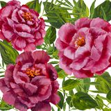 Flowers pattern - pink peonies, roses oil painting. Flowers isolated design pink peonies, roses with green leaves floral flower. Hand drawn creative flowers Stock Image