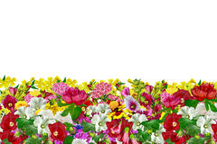Flowers isolated. On white background Stock Images