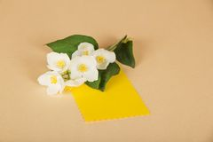 Flowers of jasmine and empty card Stock Images