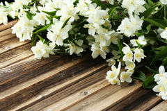 Flowers of jasmine Royalty Free Stock Images