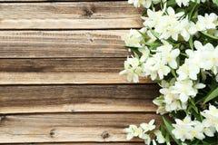 Flowers of jasmine Stock Photography