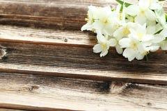 Flowers of jasmine Stock Image