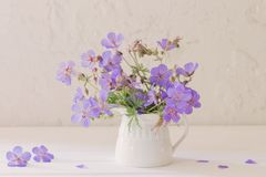 Flowers in jug on white background Stock Images