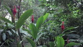 Flowers in jungle. In Palenque Chiapas Mexico royalty free stock image
