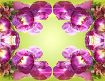 Flowers kaleidoscope Stock Photo